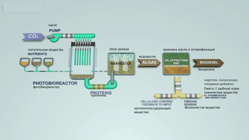 Схема: производство биодизеля из водорослей