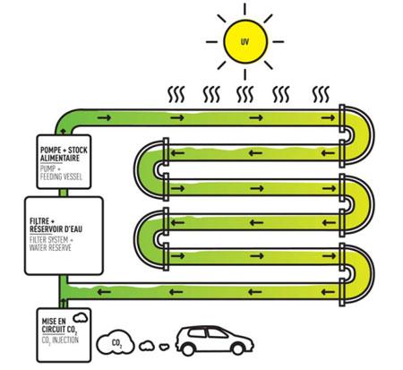 Производство биодизеля в фотобиореакторе